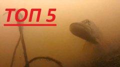 Топ 5 АТАКА ЩУКИ НА ЖИВЦА!!! Подводная съемка