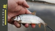 Рыбалка на фидер во время нереста щуки