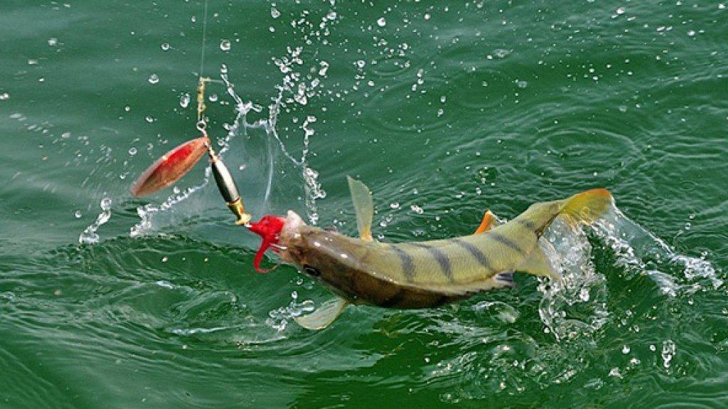 Трудовая рыбалка на 1 мая: шашлыки, удочка и природа - наше всё!