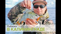 Рыбалка в Калининграде. Ловля окуня и судака на джиг