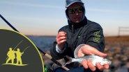 Рыбалка на южной дамбе Финского залива на фидер