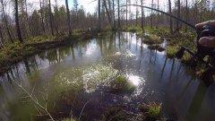 Магия бобриного посоха .Рыбалка весна 2018