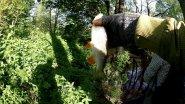 Ловля голавля на красивой микроречке в Калининградской области. Щука | запекание рыбы в фольге.