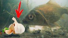 Пошел покупать чеснок и на рыбалку... Подводные съёмки!