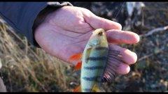 Рыбалка на ультралайт с берега  Мормышинг для ловли окуня