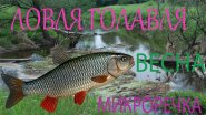 Ловля голавля весной на микро-речке. Калининград. Воблер yo-zuri l-minnow