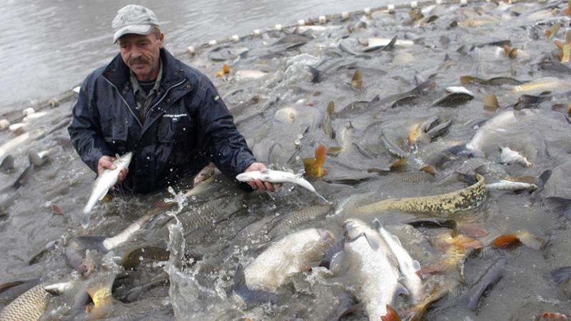 нхнч что означает у рыбаков