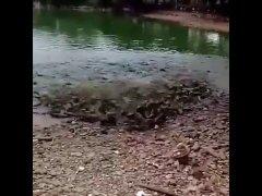 Рыба ТОННАМИ выскакивает на берег, чтобы атаковать пищу...