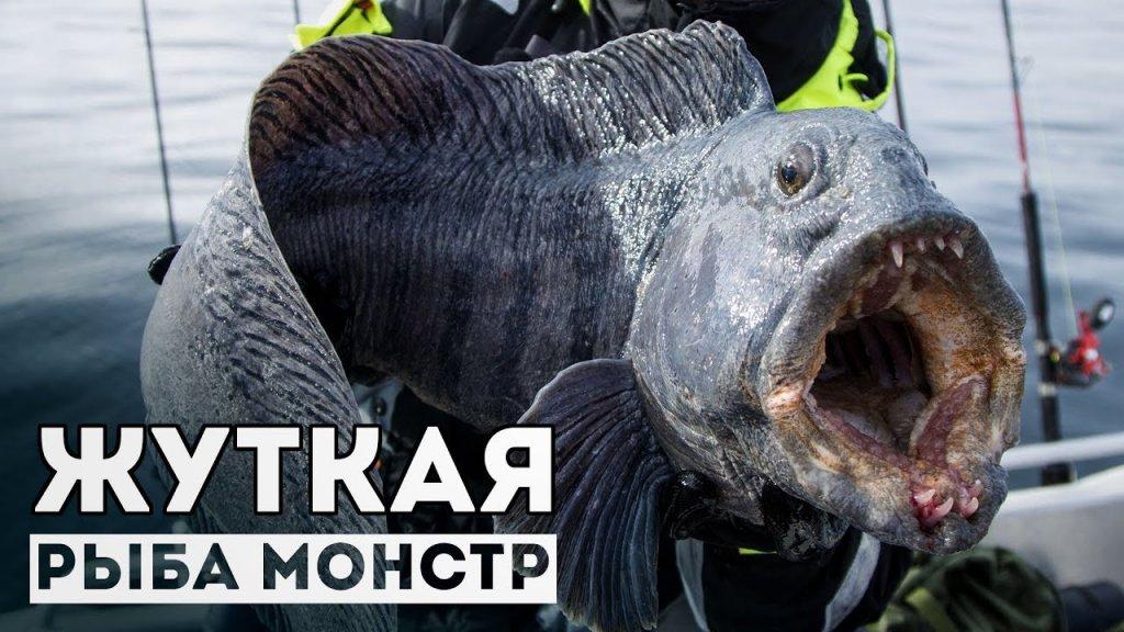 Самая жуткая рыба! Такую и под жабры страшно взять