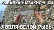 Рыбалка на закидушки / ловля белой рыбы
