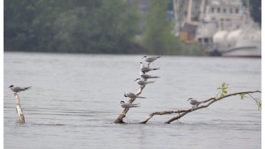Отчёт о прошедшем Чемпионате города Новосибирска по ловле спиннингом с лодок