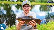 Ловля линя в в мае в пруду на фидер. Готовим вкусный обед.