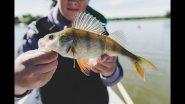 Первая рыбалка на Финском заливе. Пару часовая утренняя рыбалка.