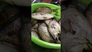 Рыба морской карась черноморский