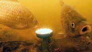 КАРАСЬ любит овсяные хлопья ГЕРКУЛЕС!!! Подводная съемка
