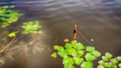 Вот это карась! Рыбалка на поплавочку в окнах травы. Только посмотрите, какие …