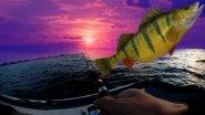 Хороший клев на вечерней зорьке. Быстрая рыбалка. Судак и окунь на джиг. Spinning моя Life.