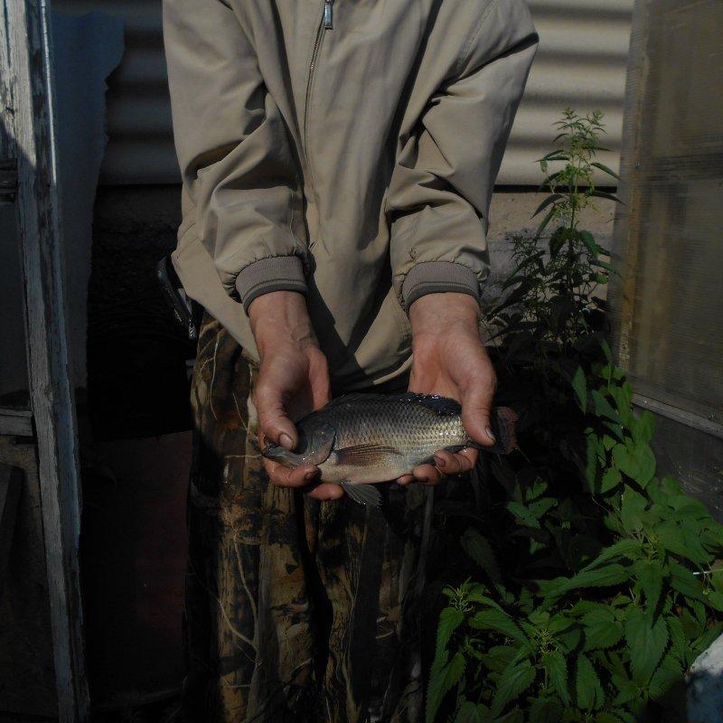 Что за рыба поймана в сибирском водоёме?