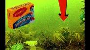 Реакция рыбы на БУЛЬОННЫЕ КУБИКИ! Подводная съемка
