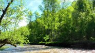 У речки в Горном Алтае