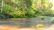 Солнечный день на горной реке