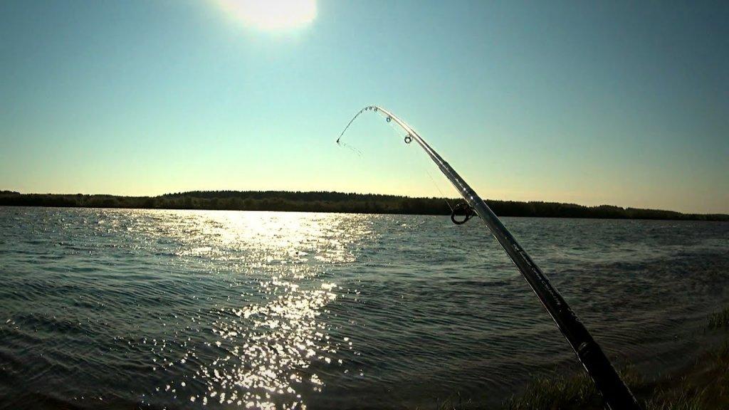 Фидерная рыбалка в сильный ветер / дождался клева / п. Койтыбож / маслаковtv