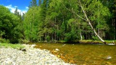 На берегу реки в Горном Алтае