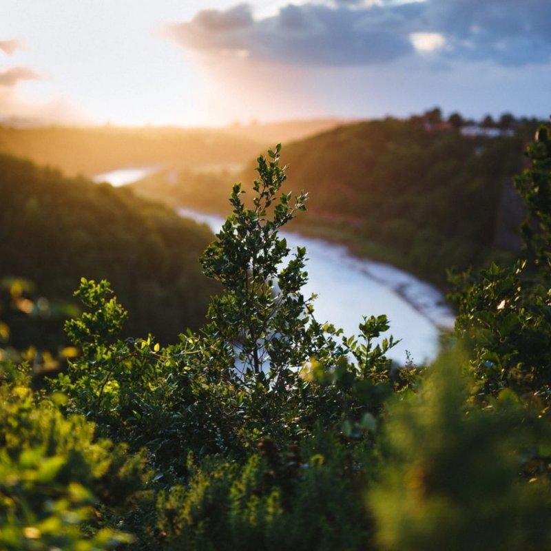 Утро у реки)