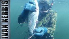 Подводная охота на форель и хариуса в Енисее.  Весна 2018.