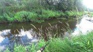 Рыбалка на таежной речке с берега, ловля щуки.