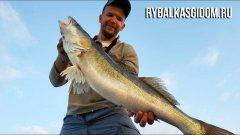 Рыбалка с гидом в Питере. Финский залив, Нева и трофейный судак.