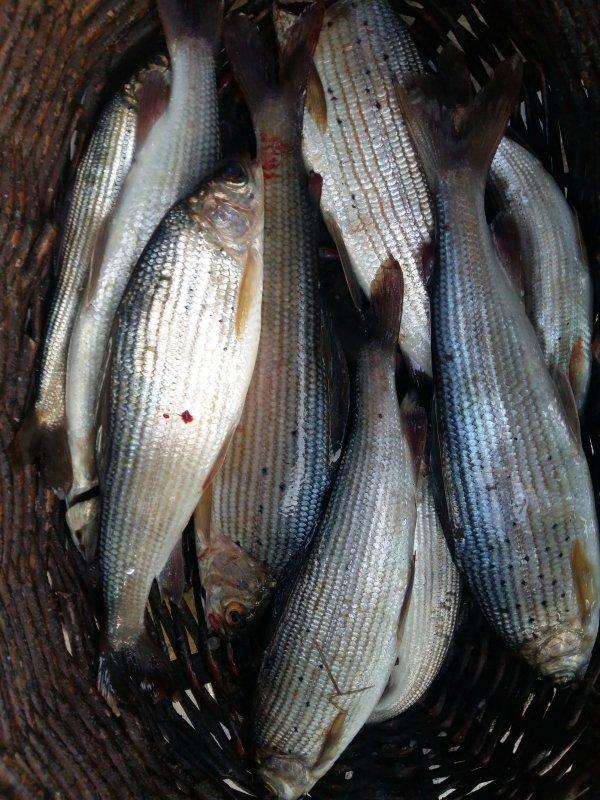Водится в Бие рыбка.