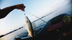 Рыбалка с рассветом, в жару. Обзор и тестирование бюджетных приманок INTECH. Spinning моя Life.