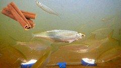 Реакция рыбы на КОРИЦУ!!! Подводная съемка