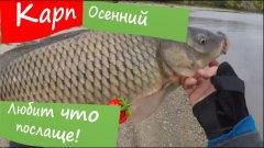 Сентябрський карп на донку. День 1 - поиск, штормовой ветер и отличная рыбалка.