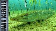 «Тувинское сафари на щуку» | Подводная охота в Туве (Трейлер)