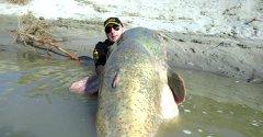 Рыбак тащит огромного судака, и тут на рыбу напал гигантский сом!