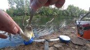 Добавил ФЕНХЕЛЬ в манку! Реакция рыбы. Подводная сьемка