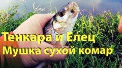 Ловля ельца на tenkara. Мушка сухой комарик. Поиск рыбы и отличные поклевки!