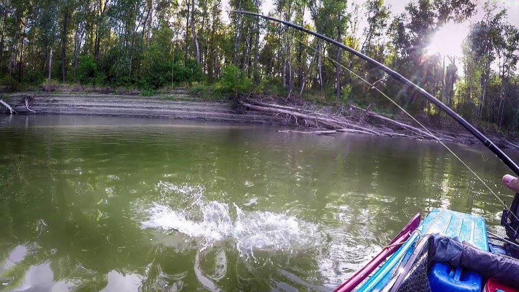 Осторожно!!! В реке злые ЩУКИ!!! Рыбалка на ОБИ в сентябре