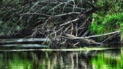 ДА ПОД ЭТИМИ ДРОВАМИ ВСЯ РЫБА СТОИТ, Летающие Щуки, рыбалка на джиг осенью