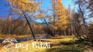 Золотая осень в горах Алтая