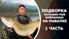 Подборка больших рыб, пойманных на рыбалке