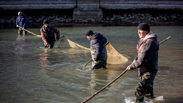 Неравнодушные новосибирцы спасли более трех тонн рыбы