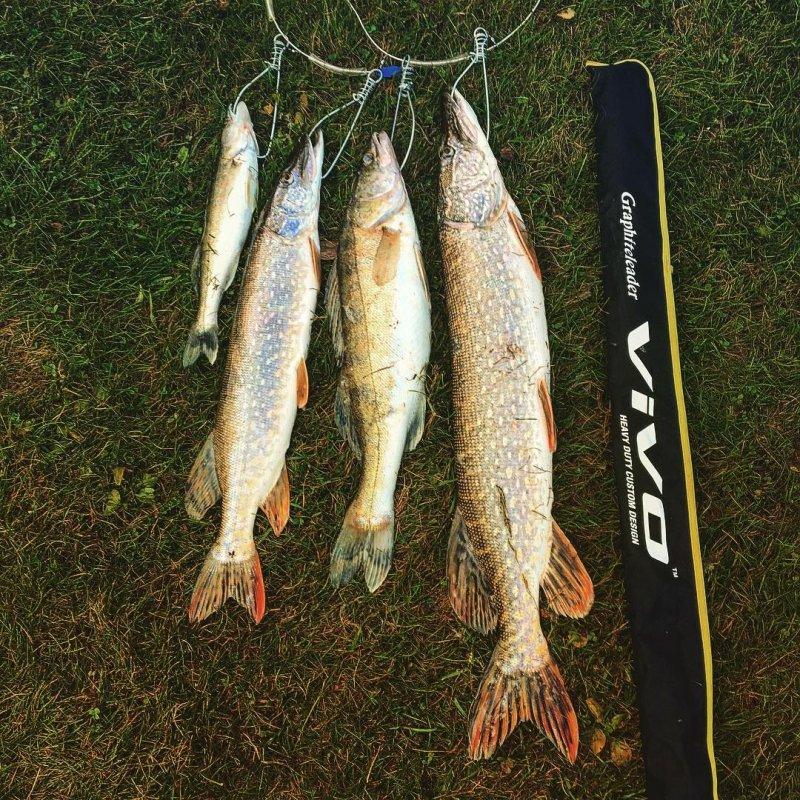 Осеннее утро бывает богатым на улов