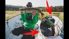 Ловля на утёнка спасла рыбалку. Щука жрёт его и осенью. Рыбалка нон-стоп 4 дня. День 2.