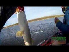 Рыбалка осенний джиг .судак шука