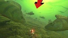 ЭТА МИГАЛКА ЗОМБИРУЕТ ОКУНЯ!! Интересная подводная съемка