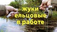 Жуки ельцовые в работе. Ловлю ельца на малой реке сверх уловистой приманкой.