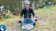 Как поймать 30 рыб за час. Ловля плотвы пикером на малой реке осенью.